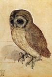 Screech Owl Pósters