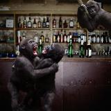 Monkey Bar (Drunk Monkeys) Art Poster Print Plakater