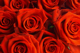 Red Roses Fotoprint