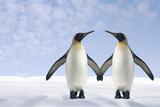 Two Penguins Holding Hands Fotografie-Druck