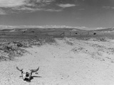 Over Grazed Land Photographic Print by Arthur Rothstein
