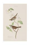 Illustration from 'Birds of America', 1827-38 Stampa giclée di John James Audubon