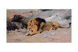 Lion Reclining in a Rocky Landscape Giclee Print by Wilhelm Kuhnert