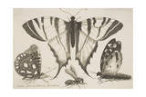 Three Butterflies and a Wasp Giclee Print by Wenceslaus Hollar