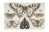 Five Butterflies, a Moth, and Two Beetles Giclee Print by Wenceslaus Hollar