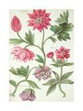 Stylised Study of Flowers Giclee Print by Nicolas Robert