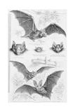 Ilustration of Six Types of Bats Lámina giclée