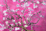 Almond Branches Pink Plakat