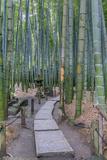 Japan, Kanagawa, Kamakura, Hokokuji Temple Garden Fotografisk trykk av Rob Tilley