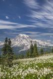 USA, Washington, Mount Rainier NP. Avalanche Lilies and Mount Rainier Fotoprint van Jaynes Gallery