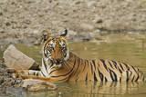 Tadoba Andheri Tiger Reserve, India Photographic Print by Jagdeep Rajput