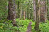 USA, Washington, Olympic National Park. Scenic of Old Growth Forest Fotografie-Druck von Jaynes Gallery