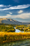 USA, Washington. Harvest Season for Red Mountain Vineyards Lámina fotográfica por Richard Duval