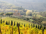 Italy, Tuscany. Vineyard in Autumn in the Chianti Region of Tuscany Fotografisk tryk af Julie Eggers
