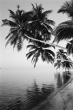 Maldives, Felidhu Atoll, Palm Tress on Beach Reproduction photographique par Michele Westmorland
