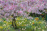 France, Giverny. Springtime in Claude Monet's Garden Stretched Canvas Print by Jaynes Gallery