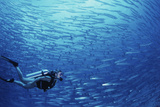 Indonesia, Scuba Diving in Sea Fotografie-Druck von Michele Westmorland
