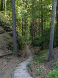 Elbsandsteingebirge, in the NP Saxon Switzerland. Hiking Trails Fotografisk trykk av Martin Zwick
