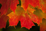 USA, Minnesota, Itasca State Park, Fall Colors Photographic Print by Peter Hawkins