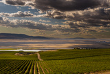 USA, Washington, Pasco. Vineyard in Eastern Washington Reproduction photographique par Richard Duval