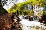 Beaten Track near A Forest Lake and Waterfall in Plitvice Lakes National Park, Croatia Fotografisk trykk av  Lamarinx