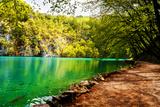 Beaten Track near A Forest Lake in Plitvice Lakes National Park, Croatia Fotografisk trykk av  Lamarinx