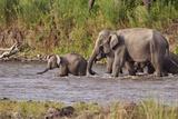 Indian Asian Elephants, Crossing the River Ramganga, Corbett NP, India Photographic Print by Jagdeep Rajput