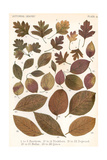 Autumnal Leaves Giclee Print