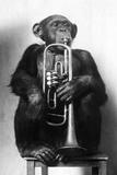 Chimpanzee Trumpeter Lámina fotográfica