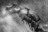 Springboks Statue Lámina fotográfica