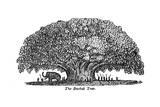 Baobab Tree and Elephant Giclée-tryk