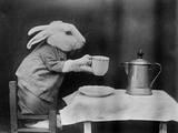 Bunny Coffee Break Fotografie-Druck