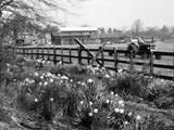Spring Farming Scene Photographic Print