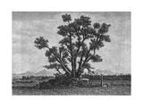 Sacred Tree of Buddha Giclee Print