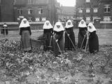 Belgian Nuns Gardening Fotografisk tryk