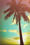 Retro Styled Hawaiian Palm Tree Reproduction photographique par Mr Doomits