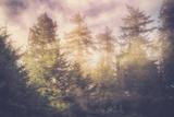 Sun Break Trees and Fog California Coast Fotografisk trykk av Vincent James