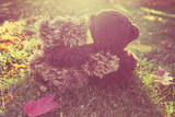 Two Stuffed Bears Hugging. Instagram Effect Photographic Print by  soupstock