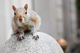 Perched Squirrel Photo Print Poster Kunstdrucke