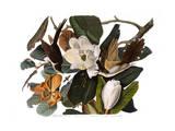 Coulicou à bec noir Reproduction procédé giclée par John James Audubon