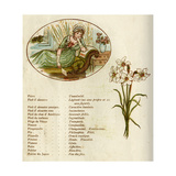 The Language and Meaning of Flowers Giclee-trykk av Kate Greenaway