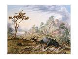 Dead Buffalo Giclee Print by Thomas Baines