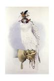 Illustration of a White Hawk Reproduction procédé giclée