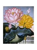 The Sacred Egyptian Bean (Lotus) Giclée-tryk