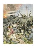 Working Elephants 1907 Gicléetryck av Achille Beltrame