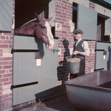 Horse's Feeding Time Photographic Print by Charles Woof