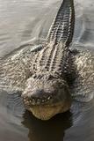 USA, Florida, Orlando, Alligator Doing Water Dance at Gatorland Fotoprint van Lisa S. Engelbrecht