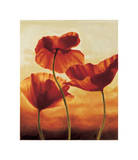 Poppies in Sunlight II Giclee Print by Andrea Kahn