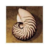Nautiles Reproduction procédé giclée par Caroline Kelly