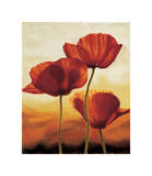 Poppies in Sunlight I Giclee Print by Andrea Kahn